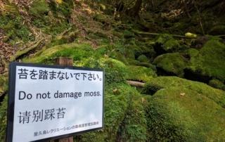 Nie niszcz mchu! Donot damage moss! Yakushima (plan podróży poJaponii)