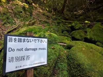 Nie niszcz mchu! Do not damage moss! Yakushima (plan podróży po Japonii)