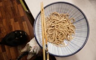 Cats like Japanese soba noodles!