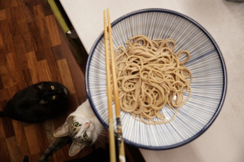 Cats like Japanese soba noodles!