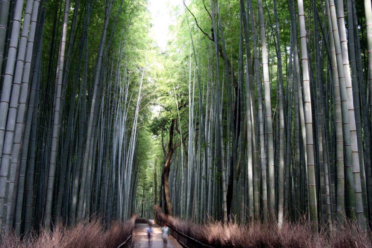 Ciekawe miejsca wJaponii: Las bambusowy wArashiyama - Arashiyama Kōen Kameyama Chiku (嵐山公園 亀山地区) / Kizankōen (亀山公園), Kioto