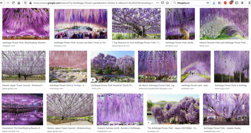 Ashikaga Flower Park: wisteria (fuji)