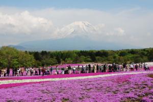 Kwiaty wJaponii (kalendarz kwitnienia kwiatów sezonowych)
