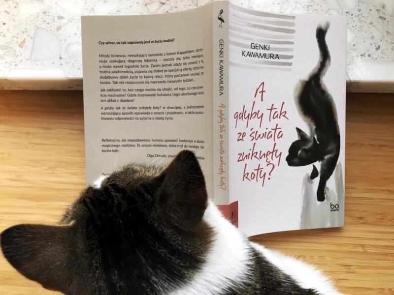 Genki Kawamura: Agdybytakzeświata zniknęły koty?