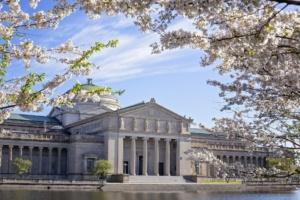 Kwitnące wiśnie (sakura) poza Japonią - lista imapa