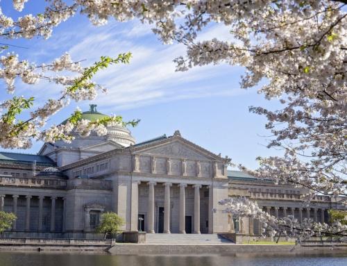Kwitnące wiśnie (sakura) poza Japonią – lista imapa